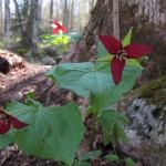 flowers - waumbek